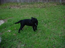 Found Dog in Kingwood March 1st in Conroe, Texas