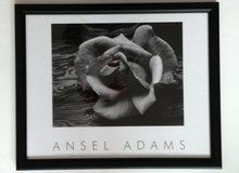 Ansel Adams Rose & Driftwood in Lockport, Illinois