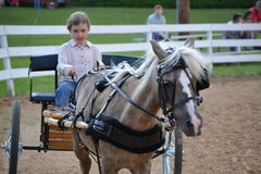 Aug 20th Stewart County Riding Club Open Horse Show in Dover, Tennessee