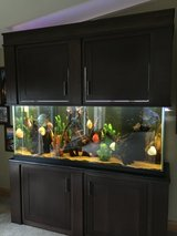FISH TANK in Joliet, Illinois