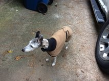 Lost dog - Whippet in Conroe, Texas