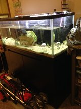 60 gal saltwater aquarium with stand in Okinawa, Japan