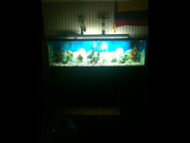 125 gallon with stand,supplies in Brockton, Massachusetts