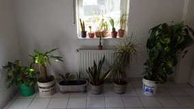 House Plants in Ramstein, Germany