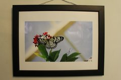 Paper Kite Butterfly Photograph 20x24 Framed. in Greenville, North Carolina
