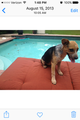 Lost male dog - Sunday April 17 approximately 4PM   Woodland Hills Dr Trailwood area in Houston, Texas