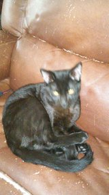 5 month old male black cat in Warner Robins, Georgia