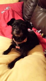 Doggie looking for a little girl to spoil in Fort Leavenworth, Kansas