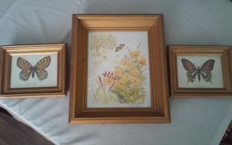 Butterfly Pictures in Conroe, Texas