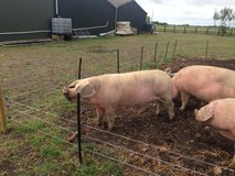 Pork,Farm Fresh, in Lakenheath, UK