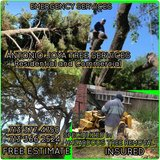 ANTONIO JOYA TREE SERVICES in Houston, Texas