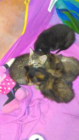 free kittens to a good home in Leesville, Louisiana