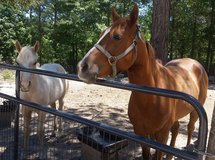 Mare and foal in DeRidder, Louisiana