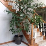 Real live house plant in Joliet, Illinois
