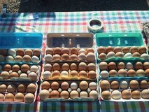 FARMER'S MARKET - Eggs in Alamogordo, New Mexico