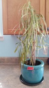 Potted Plant in Beaufort, South Carolina