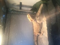 Bearded dragons and cages in Leesville, Louisiana