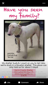 Dog at Canino Rd shelter in Houston, Texas
