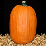 """NEW!  Tall Orange Carvable Pumpkin – 13"""" H x 10"""" W – by Celebrate it! in Naperville, Illinois"""