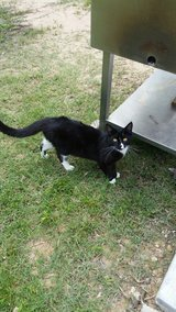Free cat in Kingwood, Texas