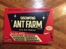 Ant Farm in Glendale Heights, Illinois