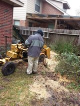 ANTONIO JOYA TREE SERVICES***** in Houston, Texas