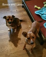 2 Adorable Pups for Adoption in Spring, Texas