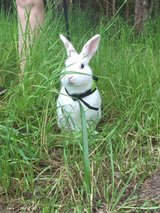 Rabbit in Fort Polk, Louisiana
