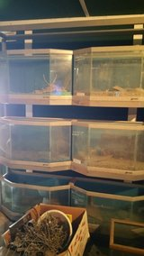 Custom Fish Tanks with Stand in Alamogordo, New Mexico