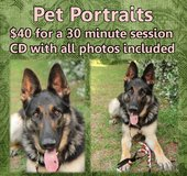 Pet portraits in Beaufort, South Carolina