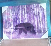 New Bear Picture in Alamogordo, New Mexico