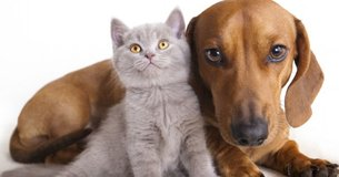 Animal charity needs donations and we gladly provide free pick up in Kingwood, Texas