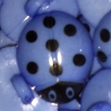 NEW Blue Ladybug Buttons in Okinawa, Japan