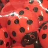 NEW Red Ladybug Buttons -Approximately 500! in Okinawa, Japan