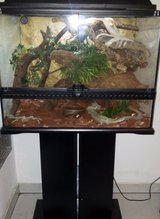 Snakes w Tank stand set in Ramstein, Germany