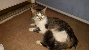 Cat free to a loving forever home in Clarksville, Tennessee