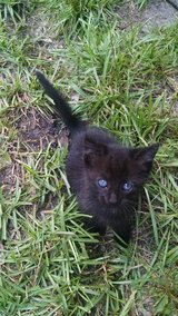 Kittens to good home in Camp Lejeune, North Carolina