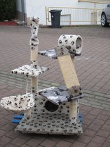 paw prints cat tree in Ramstein, Germany