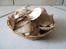 small basket of decorative shells in Stuttgart, GE