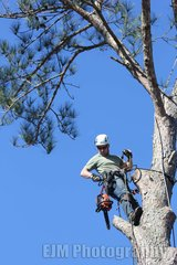 Affordable Tree Service in Camp Lejeune, North Carolina