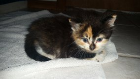 ferrel kittens are ready for a new home - Trouble in Lawton, Oklahoma