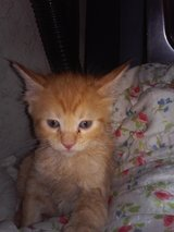 kittens nine in all.free to good homes in Beaumont, Texas