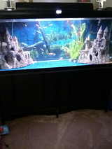 55 gallon fish tank in Hinesville, Georgia