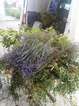 LANDSCAPING /YARD WORK / GARDEN MAINTAINANCE SERVICES in Ramstein, Germany