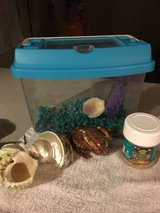 ** Reduce** Hermit Crab!! Can't keep ...moving in Fort Polk, Louisiana
