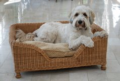 wicker dog basket in Lakenheath, UK