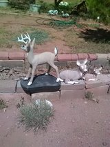 cement deer family in Alamogordo, New Mexico