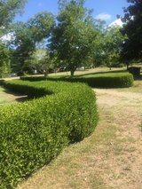 Free Hedge bush Shrubs in Warner Robins, Georgia