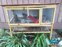 Laying quail with hutch and food in Houston, Texas