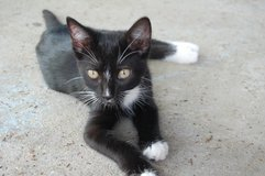 Male kitten in Fort Polk, Louisiana